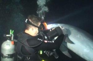Keller Laros saves bottlenose dolphin