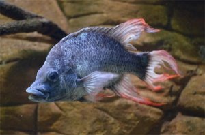 pesce_estinto